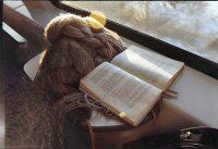 Dieviškoji knygų ugnis